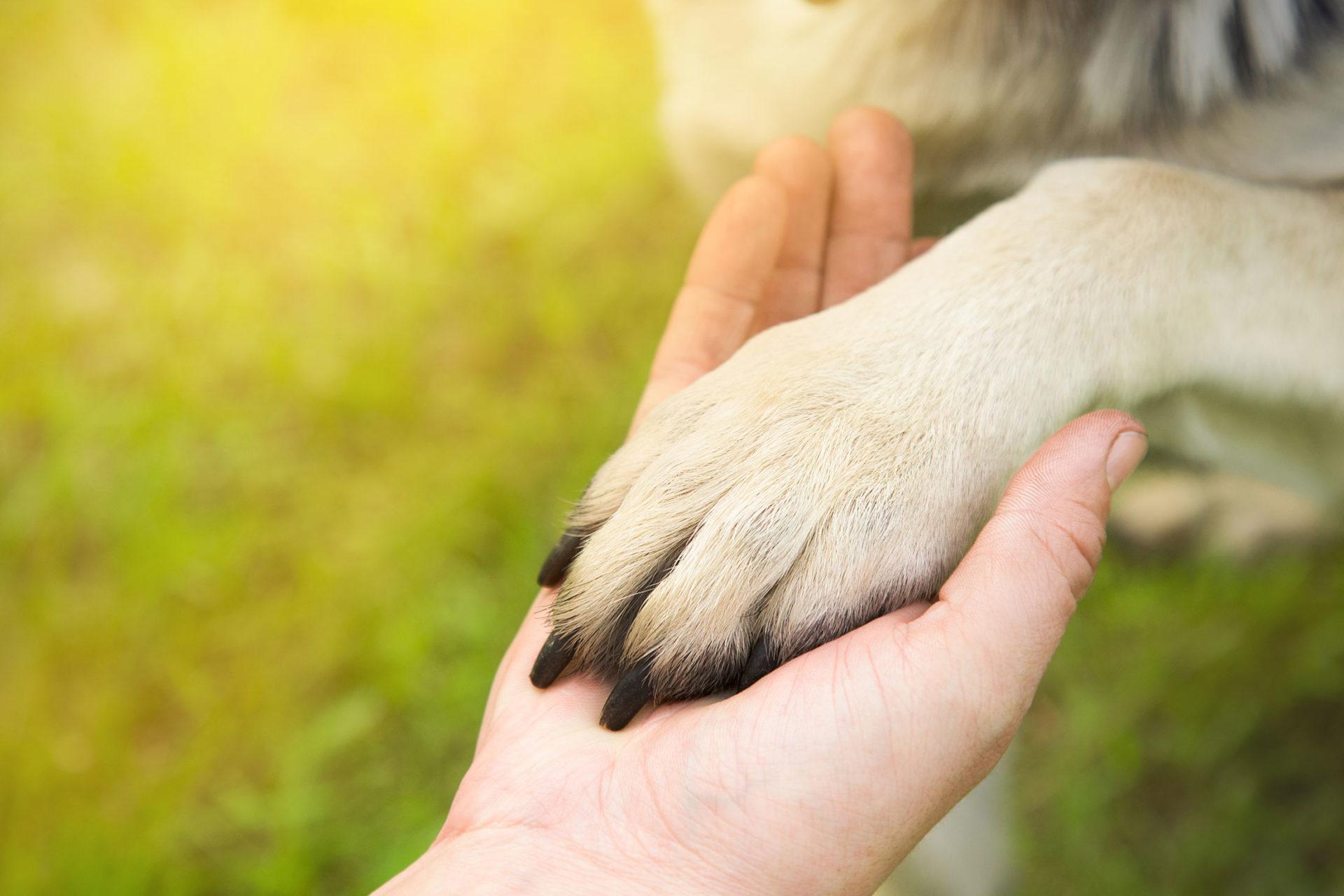 Summers Insurance animals dog paw