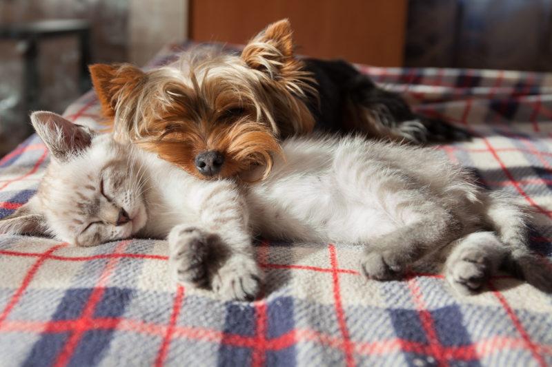 Summers Insurance multi-pet insurance