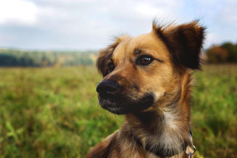 summers insurance dog animals