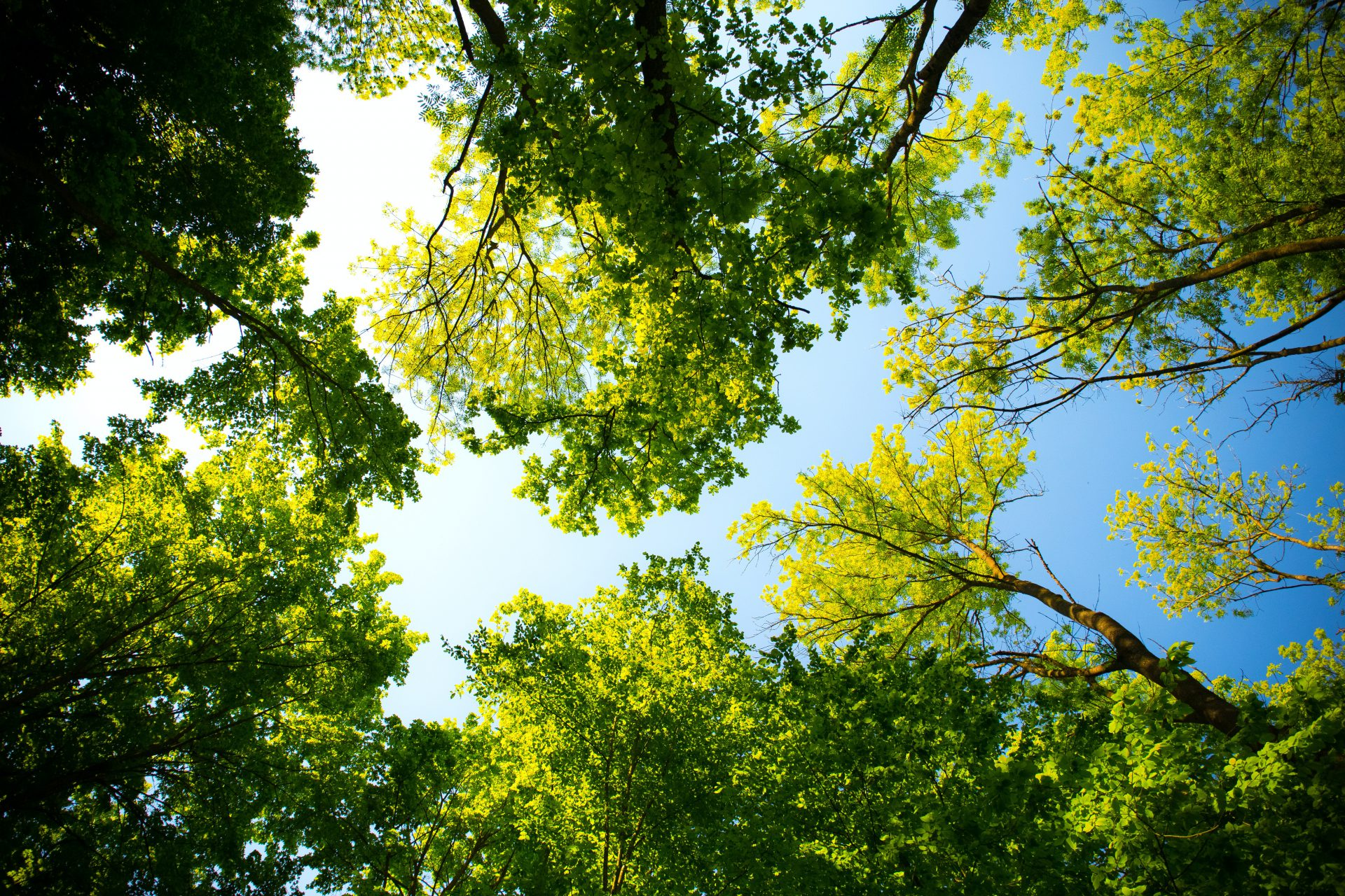 Summers and company view of trees and sky